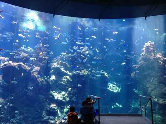 Cool Picture Of Monterey Bay Aquarium Monterey