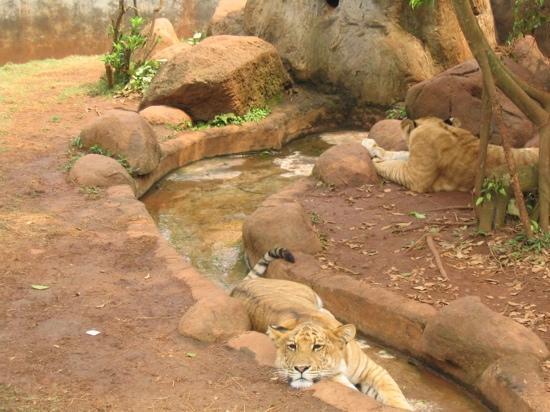 Haikou, Çin: 狮虎兽