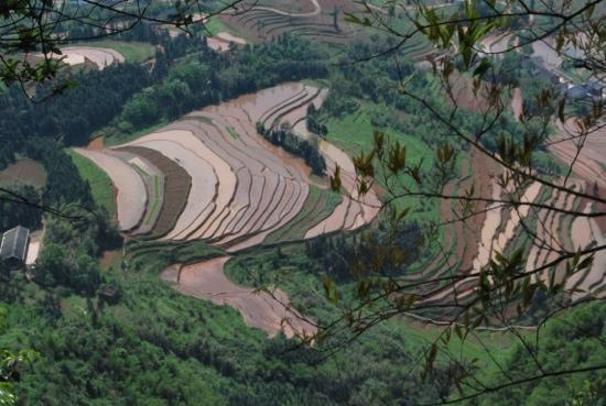 Dragon's Backbone Rice Terraces: 龙脊