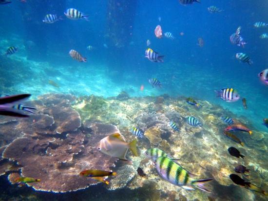Sari Pacifica Hotel, Resort & Spa - Redang Island: 酒店浮潜可见热带鱼和珊瑚