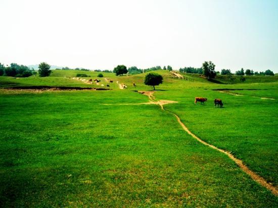Mulan Paddock: 木兰围场草场