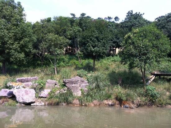 Ningbo Zoo: 虎园