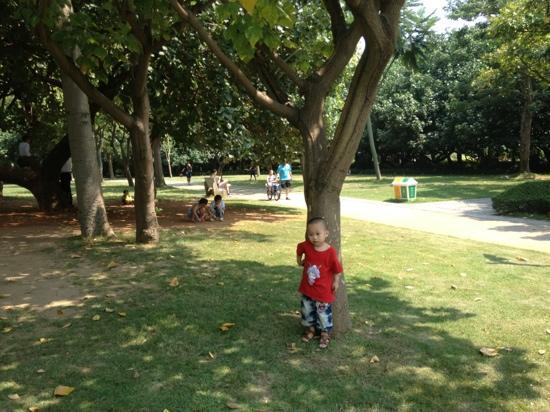 Xiamen Nanhu Park: 南湖公园的绿树草坪