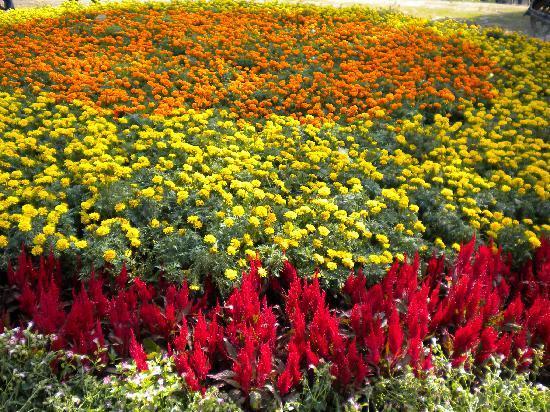 Hunan Forest Botanical Garden : 铺满了花的草坪