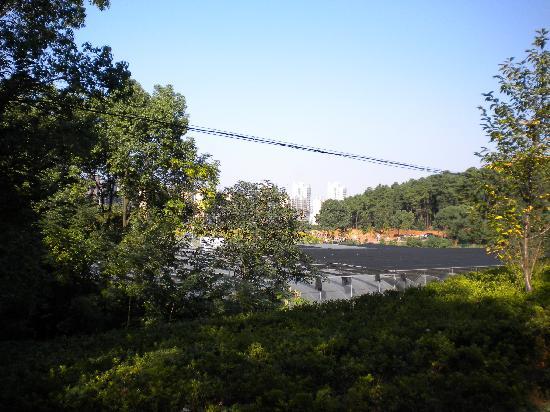 Hunan Forest Botanical Garden : 种植园的边上