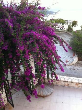 Lycia Apart Otel: 花园