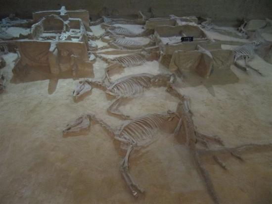Emperor Carriage Museum : 刻