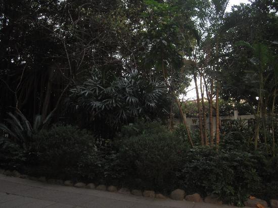 Fuzhou Jinniushan Park: 傍晚的金牛山公园