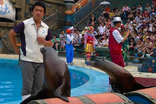 Dalian Discovery Kingdom : 发现王国的海狮表演