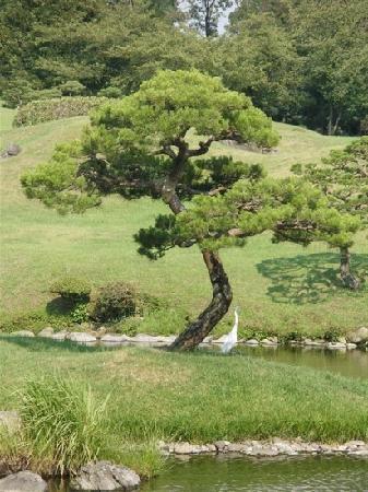 Minano-machi, Japan: 树