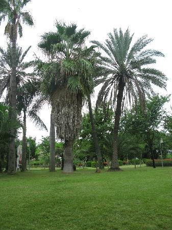 Xiamen Bailuzhou Park: 公园内的草坪