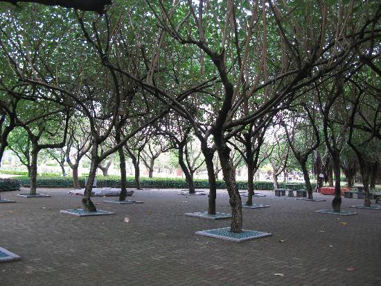 Xiamen Bailuzhou Park: 公园内各种树木,这一片躲阴凉是极好的!