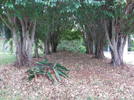 Xiamen Bailuzhou Park: 秋天了,落叶满地,像不像森林?