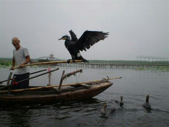 Baiyang Lake Entertainment Center: 鱼鹰