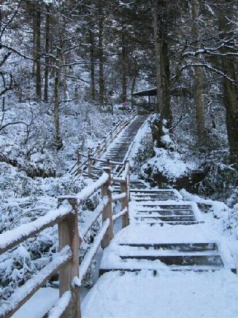 Leidong Ping : 下雪了