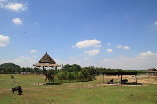 Ningbo Zoo: 雅戈尔动物园
