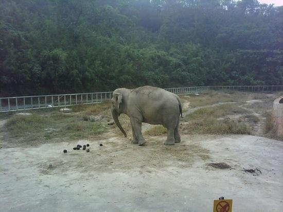 Ningbo Zoo: 雅戈尔动物园的大象!