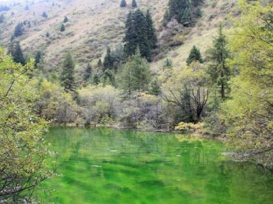 Erdaohai Lakes Scienc Spot: 二道海的小海子,绿意盎然
