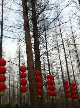 Chongming Dongping Forest Park
