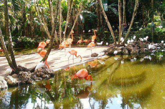 Alligators Picture Of Flamingo Gardens Davie Tripadvisor