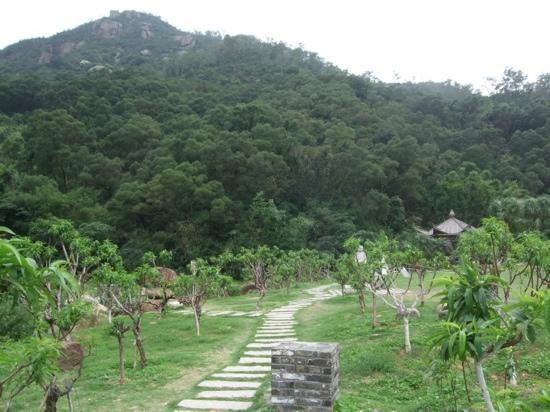 Zhuhai Wanzai Zhuxian Cave: 竹