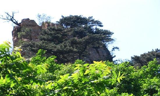 Jiulongchuan Nature Reserve: 山顶迎客松