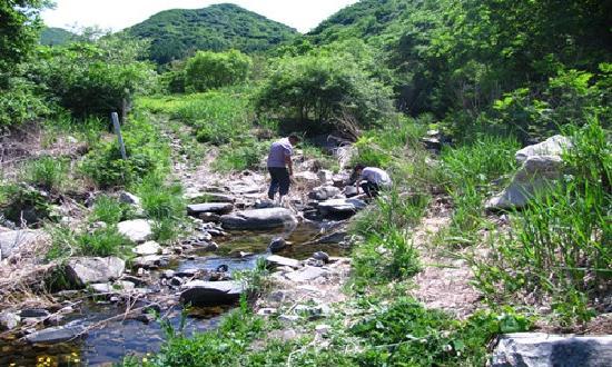 Jiulongchuan Nature Reserve: 山泉水