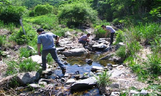Jiulongchuan Nature Reserve: 山泉小溪