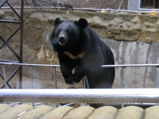 Yanqing Badaling Bear Park: 熊