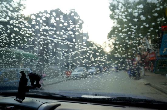 Xitang Mu Yi Ju Inn: 老板开着车带我们去买五芳斋粽子,看到车窗上的小雪花