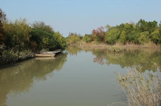 Wusongkou Paotaiwan Forest Marsh Park: 湿地公园