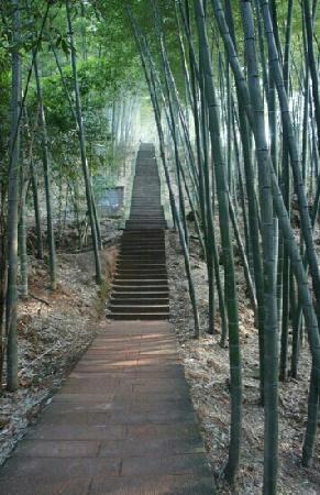 Guizhou Bamboo Forest