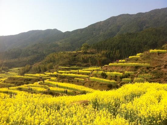 Jiangling Terrace Scenic Resort : 江岭
