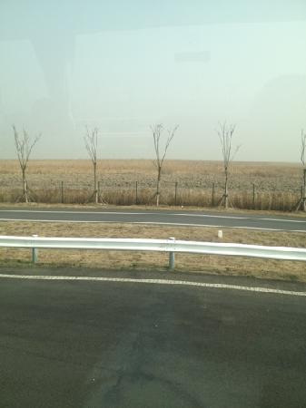 Chongming Dongtan Natural Reservation: 荒原