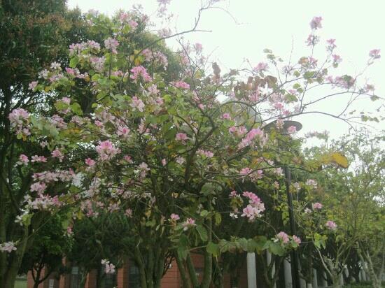 Heshan Park