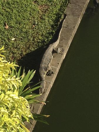 Club Med Bali: 蜥蜴