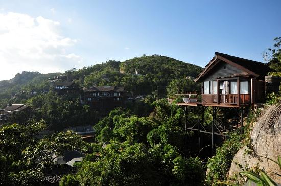 Earthly Paradise Bird Nest Resort: 云顶鹰