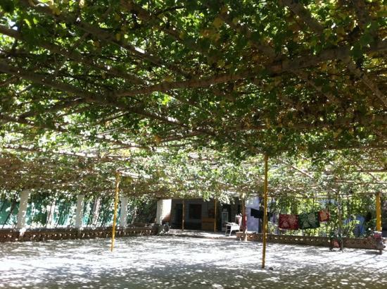 Grape Valley: 葡萄沟