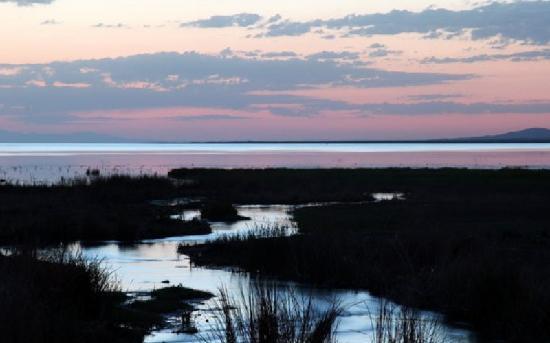 Korla, จีน: 博湖湿地