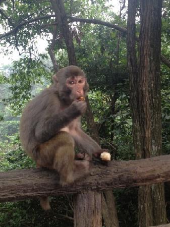 Huangshi Village: 一路上居然遇到很多要吃食的猴子 完全不怕生