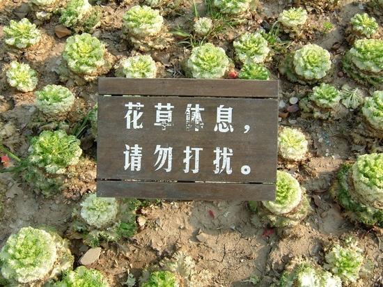 Nanjing Lovers' Garden: 有爱的标语