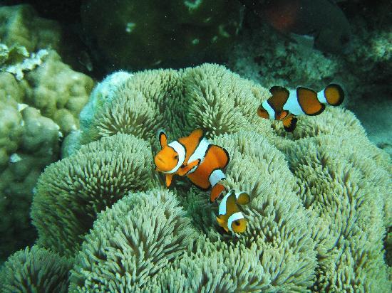 Coron, Philippines: Nemo famillly