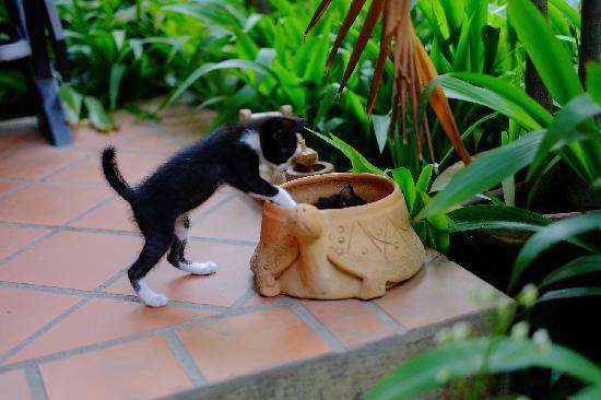 Chiang Mai Summer Resort: 猫趣3