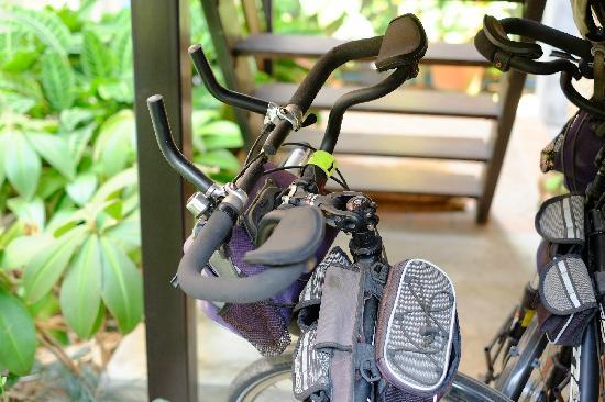 Chiang Mai Summer Resort: 美利达野狼