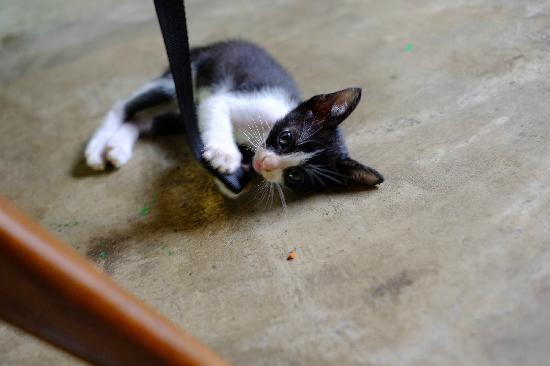 Chiang Mai Summer Resort: 猫趣6