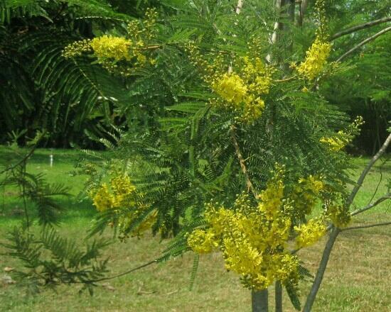 Tropical Flower Garden : 热带花卉园