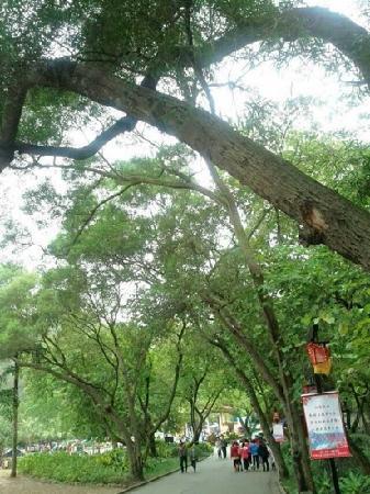 Dalongtan Scenic Resort:                   景区门口的绿树