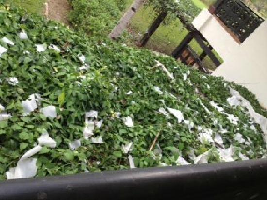 Nexus Resort & Spa Karambunai :                   rubbish