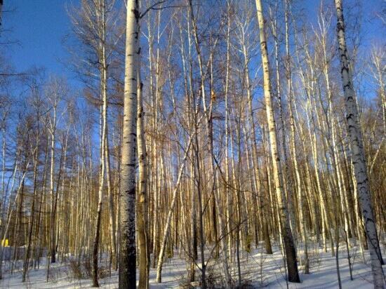 Beijicun Forest Park : 好美的景色