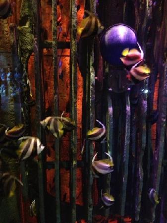 Atlantis, The Palm: 水族馆在酒店一层
